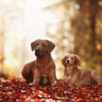 Zijn geperste brokken een goed idee voor jouw hond?